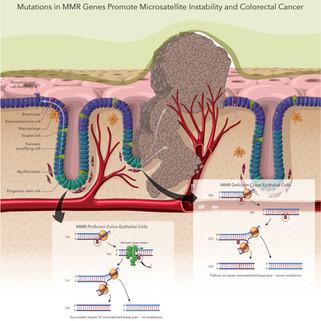 Immunological Journal Figure