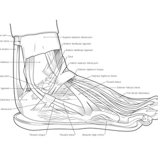 Lateral Foot Line Illustration