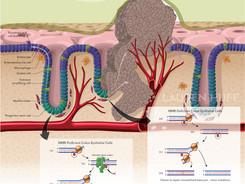 Immunological Journal Illustration