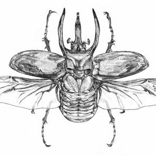Giant Rhinocerous Beetle Poster