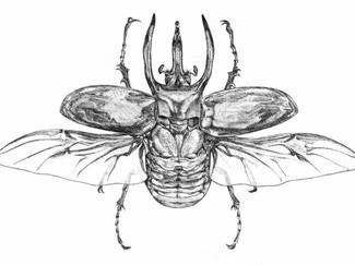 Giant Rhinocerous Beetle
