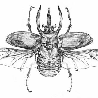 Giant Rhinocerous Beetle Educational Poster