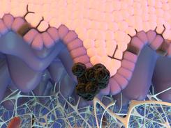Adoptive Cell Transfer Animation