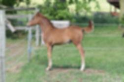 2020.06.24 Horses (53).JPG