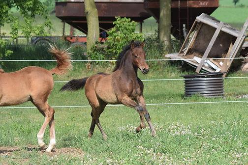 2020.06.24 Horses (25).JPG