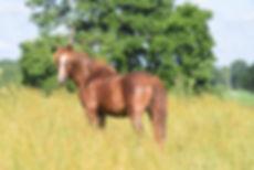2020.06.24 Horses (484).JPG