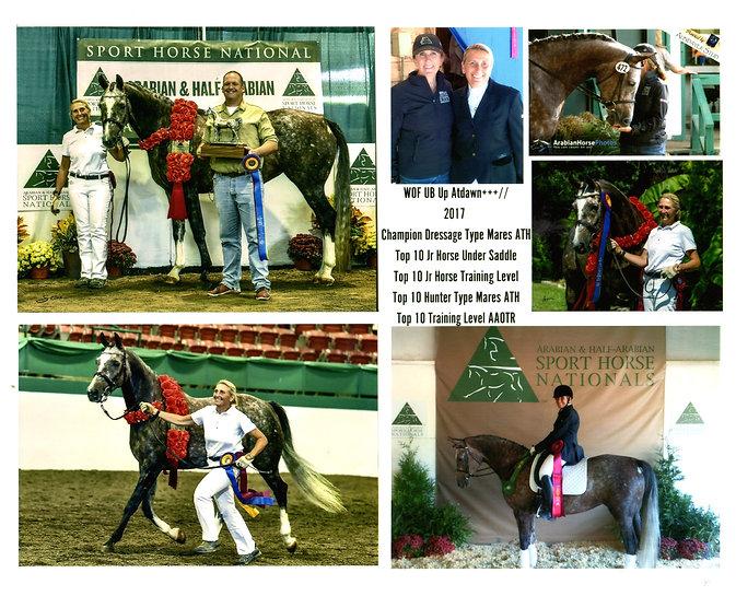 Mary Beth & horses 2017_0001.jpg