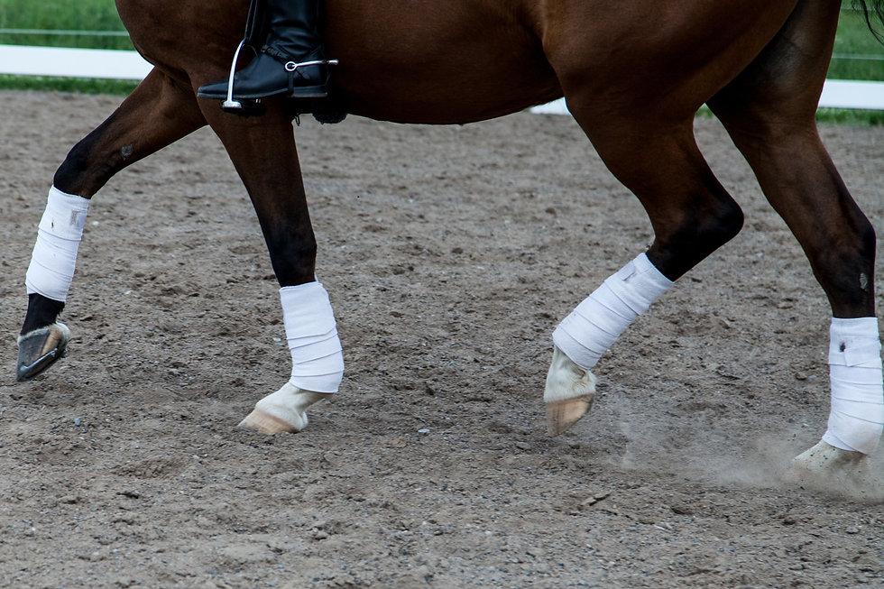 Arwen's legs 2014.jpg