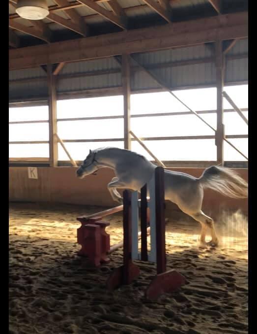 Stryder jumping.jpg