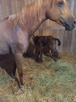 3 Andie new born.JPG