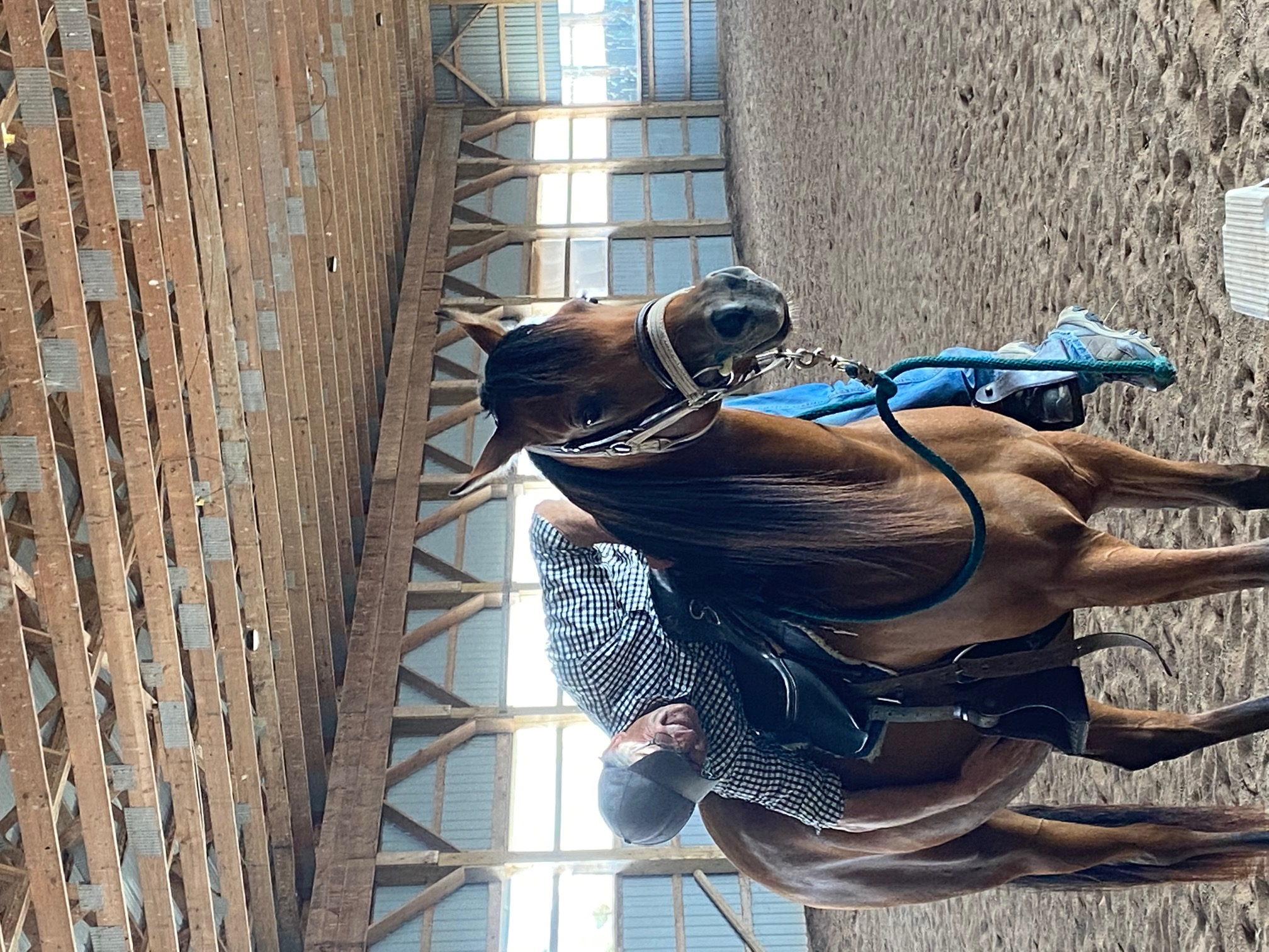Andie first time in saddle.jpg