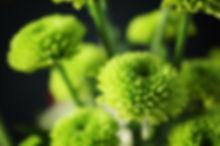 green buds.jpg