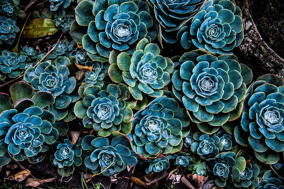 pattern-green-and-blue-succulent-plants-