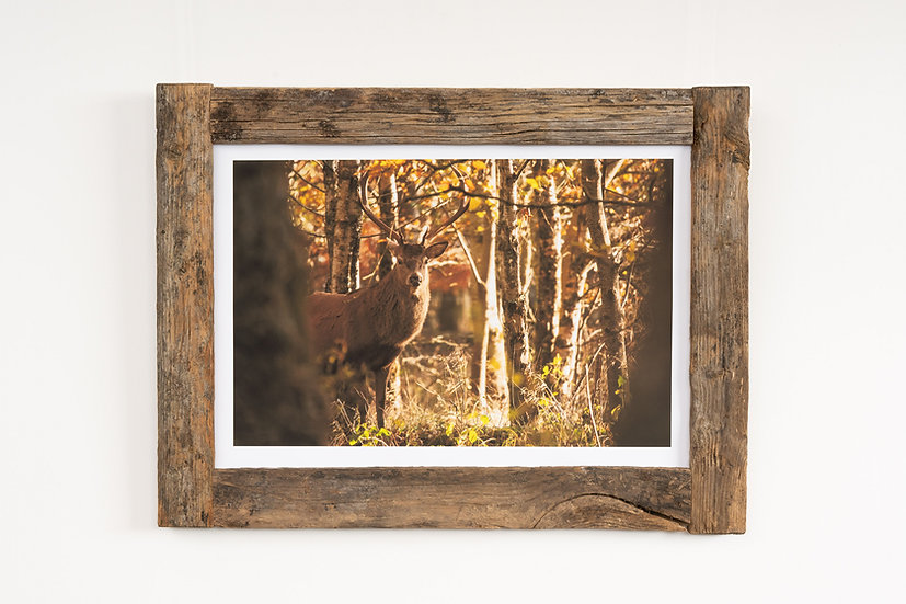 Faoillin Stag Larch Post Frame