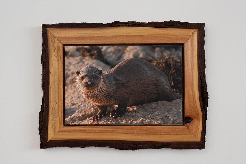 Otter Waney Edged Frame