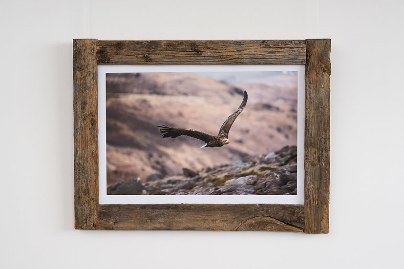 White Tailed Eagle Larch Post Frame