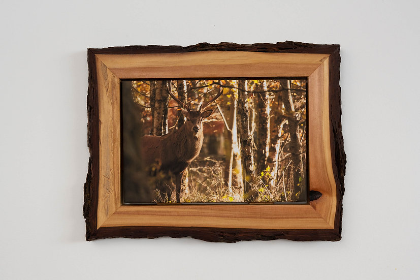 Faoillin Stag Waney Edged Frame