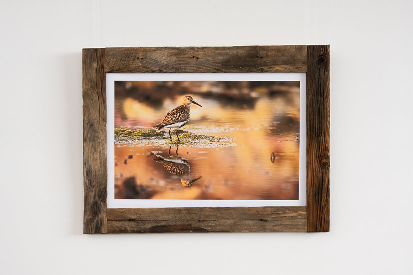 Dunlin Larch Post Frame
