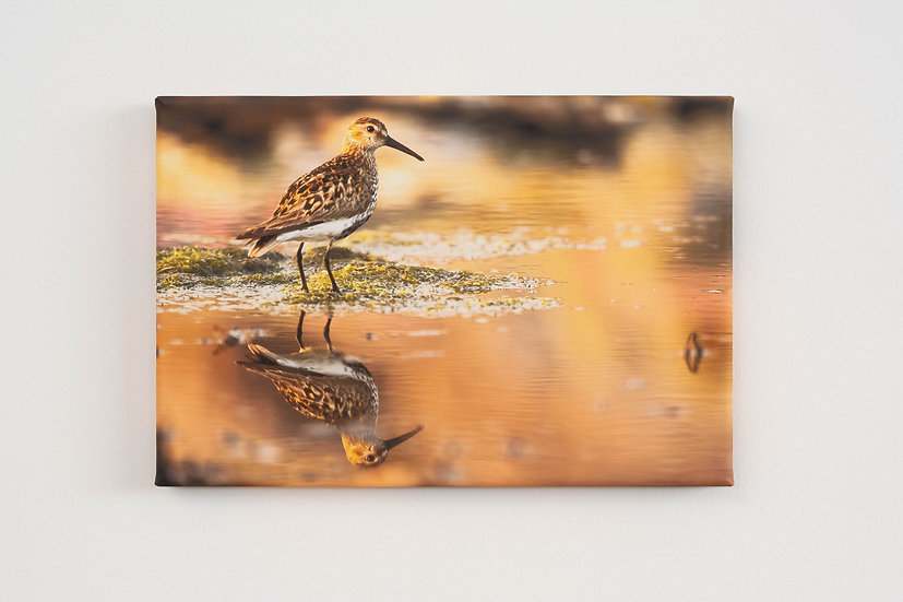 Dunlin Canvas