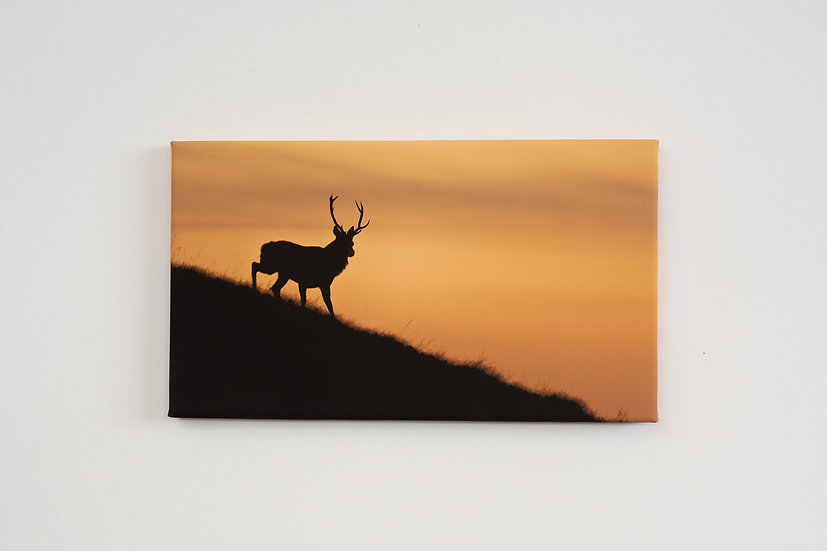 Torgarve Stag Canvas