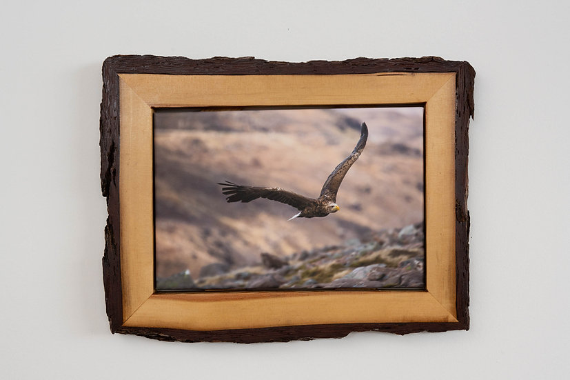 White Tailed Eagle Waney Edged Frame