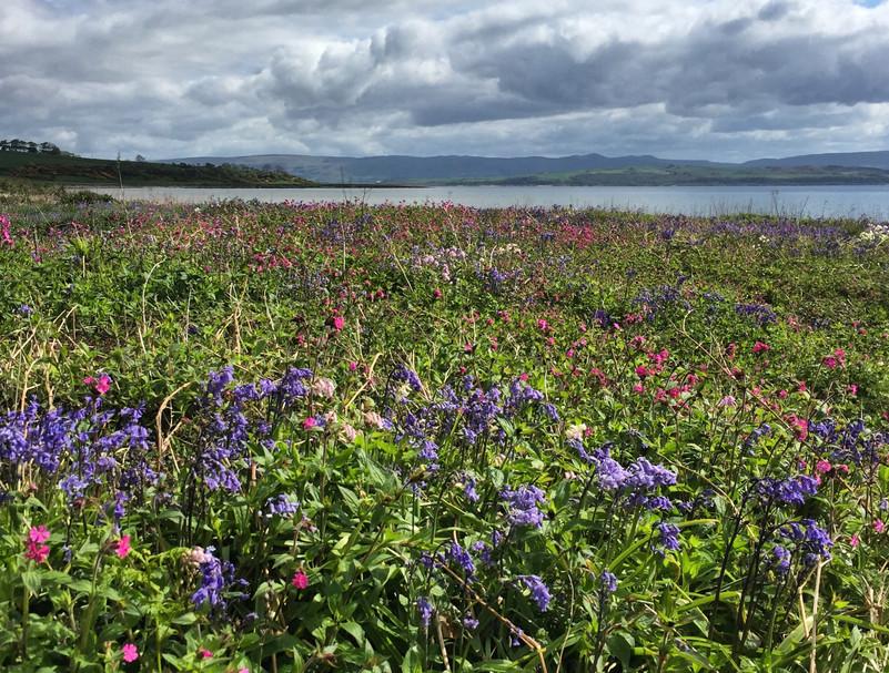 Wildflowers behind the bay.