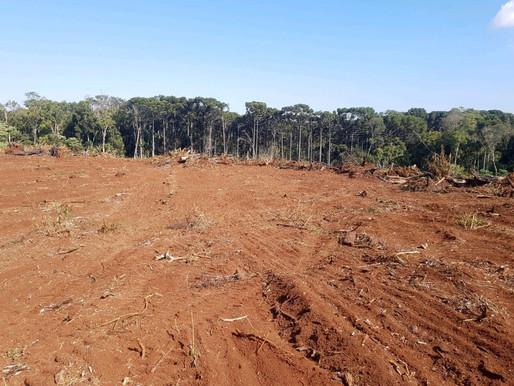 Com 406 hectares desmatados no Centro-Sul, multas somam R$ 4,2 milhões