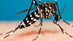 Dengue: Boletim semanal confirma mais 30 casos no Estado