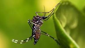 Dengue: Informe semanal registra mais 56 casos no Paraná