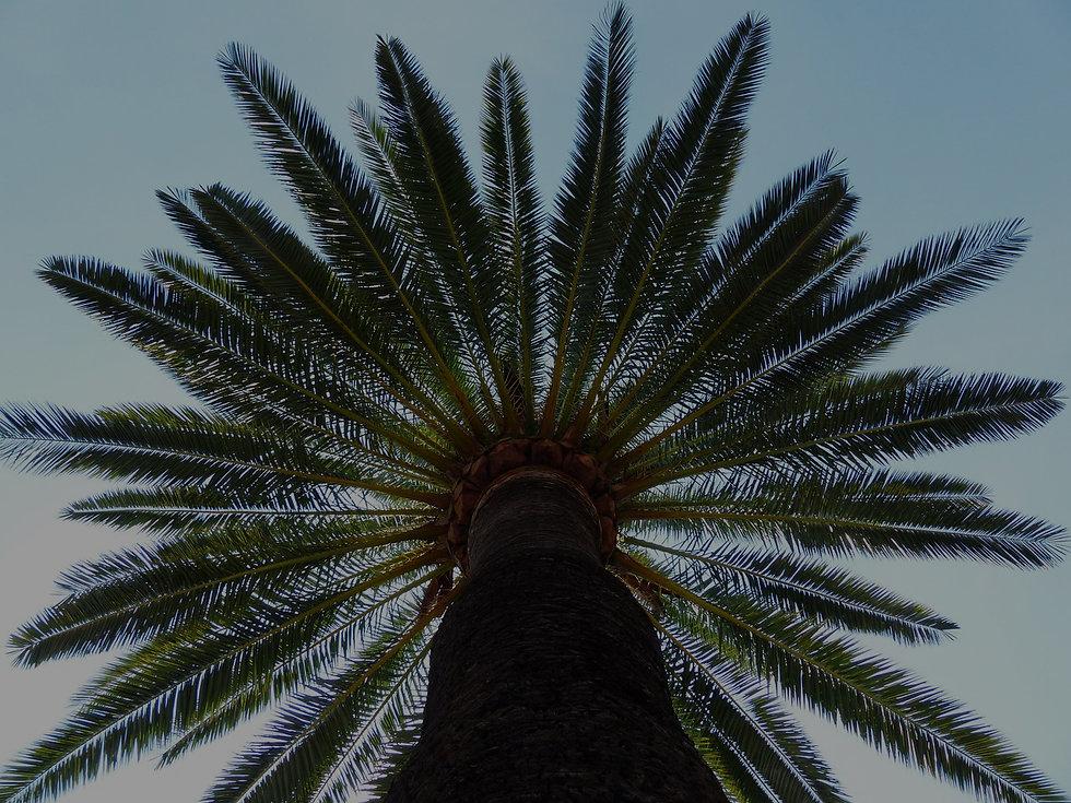 palm-187045_1280 2.jpg