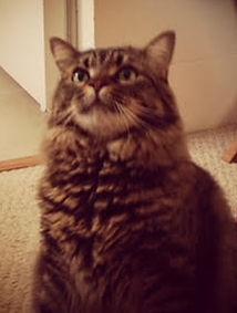 Chuck the cat