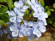 flower-4923465_1920.jpg
