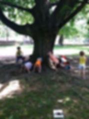 tree by a tree.jpg