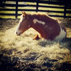 JJ in the hay