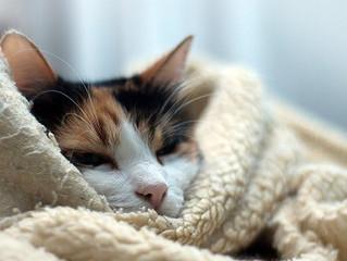 冷え性は生活習慣で改善できます