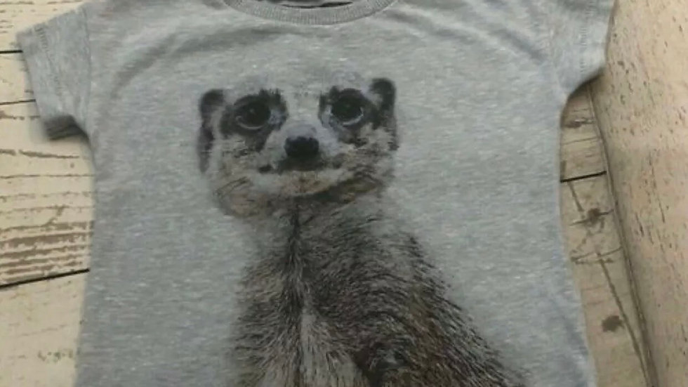 Boys Next Meerkat T-shirt Age 3-6 Months Print On Back Good Condition