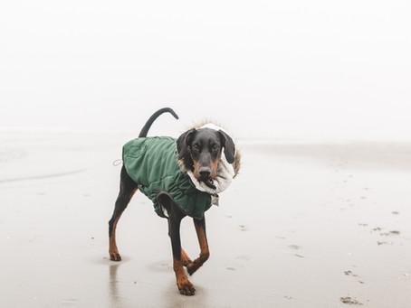 Hundemantel - Modischer Gag?