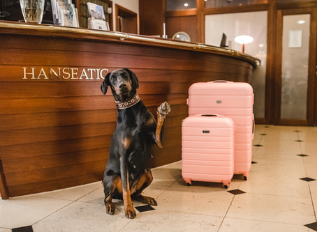 Hotelurlaub mit Hund auf Rügen