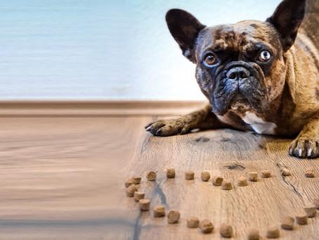 Parmesan-Leckerlis für Hunde