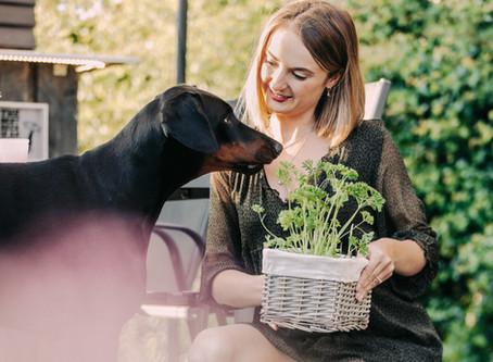 Gesunde Kräuter für Hunde