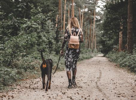 Hundebegegnungen an der Leine