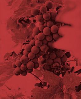 Viñedo-tour-queretaro-de-vinos-01-viajab