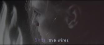 Juliette Van Dormael, DOP, Director of photography, videoclip, Birds Loves Wires