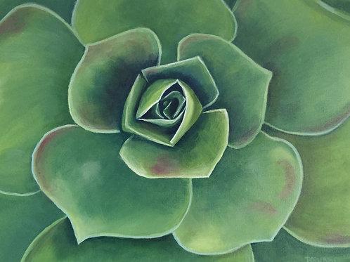 Succulent  Acrylic 12 x 6 x 1