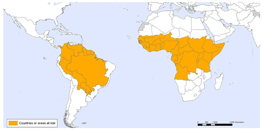 yellow fever country maps