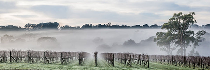 vineyard_fog.jpg