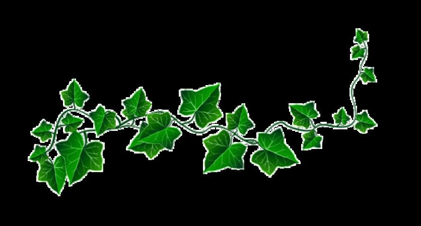 kisspng-clip-art-openclipart-vine-portab