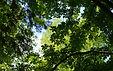 canopy-3388987_1920.jpg