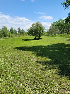 Picnic meadow.jpg