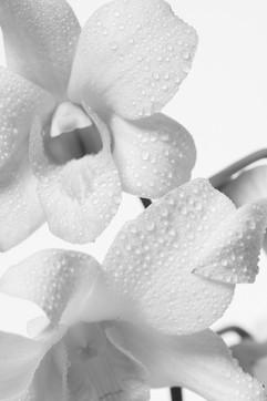 季節の花 作品撮影